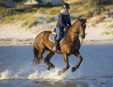 Begin aan een nieuwe sport: Paardrijden