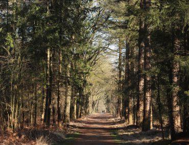 Wandelarrangement in Brabant met verblijf in een Suite