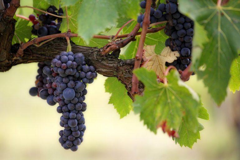 Ontdek wijnland Italie