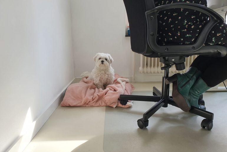 hond op kantoor